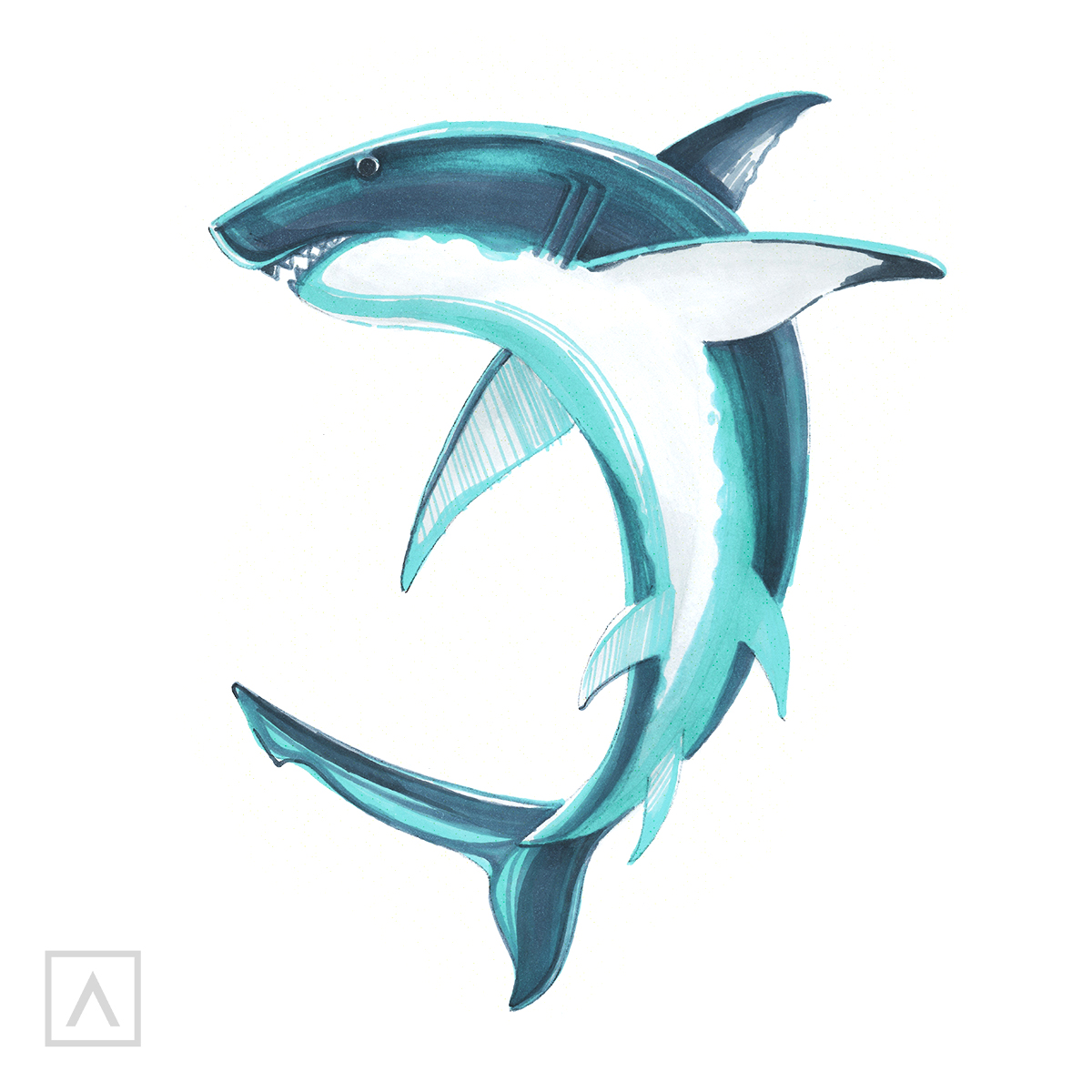 Shark Drawing Step 6