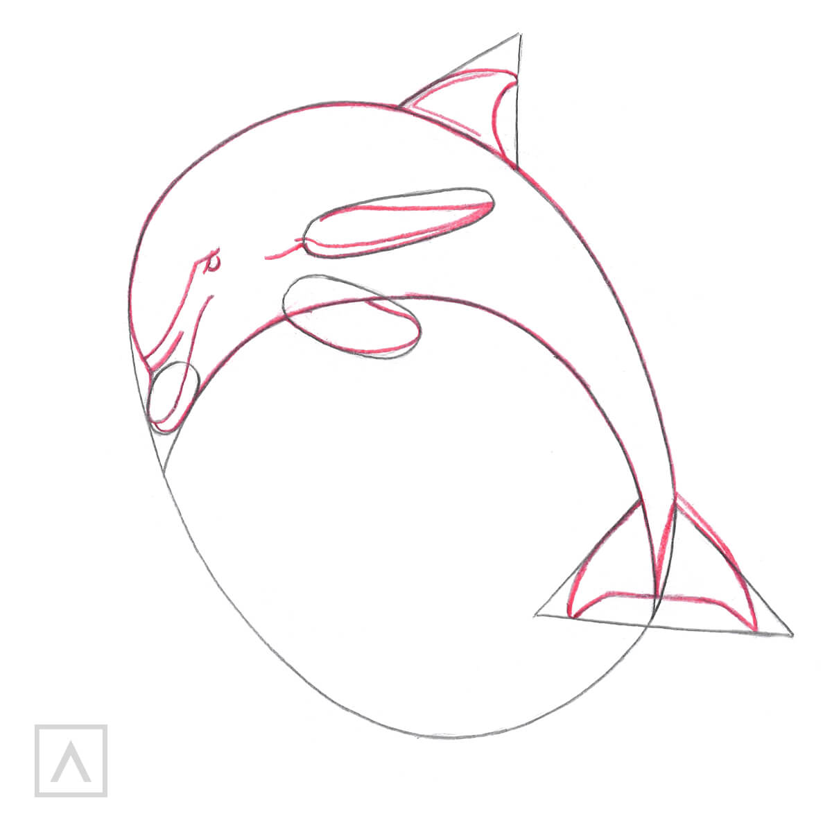 How to Draw a Dolphin - Step 3