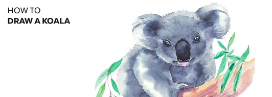 How to Draw a Koala: Easy Step-By-Step Koala Drawing